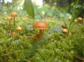 Tiny World by Rick-TinyWorlds
