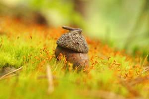Tiny Acorn Home by Rick-TinyWorlds