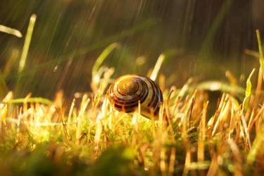 The Levitating Snail by Rick-TinyWorlds