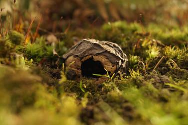 My home is a tiny Walnut by Rick-TinyWorlds