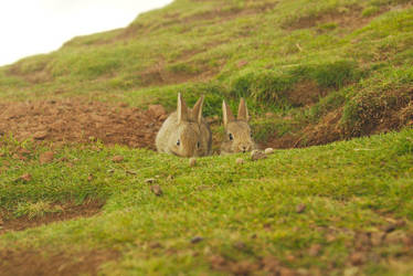 Cute Buns on Top of the Hill by Rick-TinyWorlds