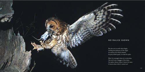 Owl Poem: No Malice Shown -Owls Poetry by CliveBlake