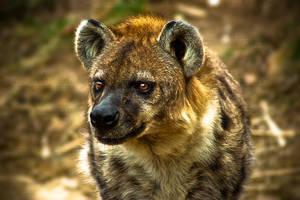 Hyena by SnowFox1