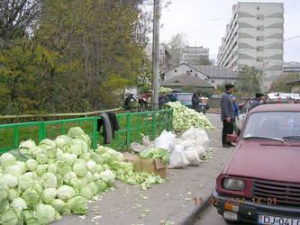 Cabbage by plain-kady