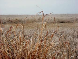 prairie grass by art-overflow