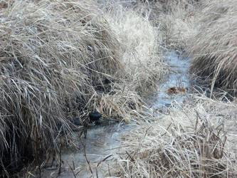 creek by art-overflow