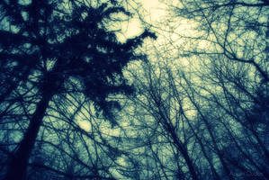 A Forest by Dudy1