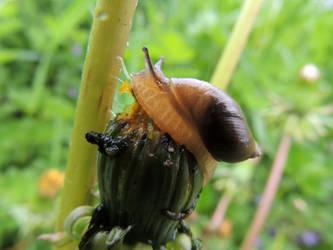 What Snails Do by k1haku