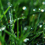 Fresh Dew of Spring by JVarriano