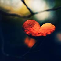 heart-shaped leaf by meyrembulucek