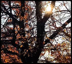 Morning Light by morningstarskid