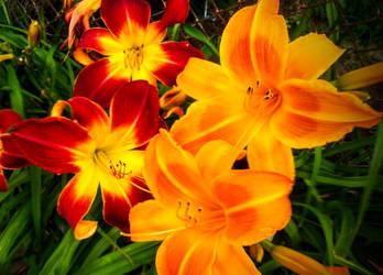 Brillance of Color by morningstarskid