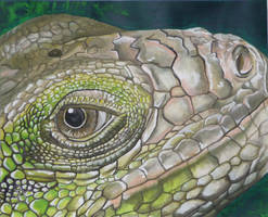 Iguana by yikes190