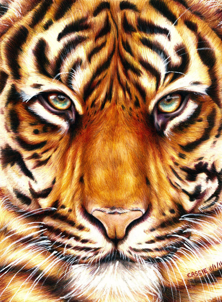 Eye of the Tiger by yikes190