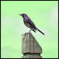 the lone birdie by eRiQ