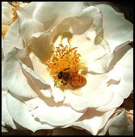 Bee Good by eRiQ