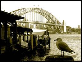 sydney seagull by eRiQ