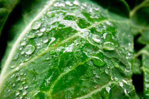 Green 4 by luv2danz