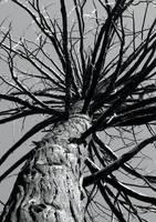 Spikey Tree by luv2danz