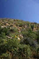 desert landscape by luv2danz