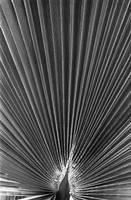palm leaf by luv2danz
