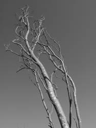 Tree 003 by mrhollow