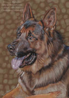German Shepherd by Hei-La