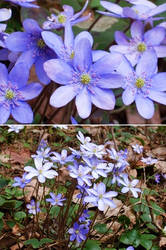 spring flowers by Lonsey