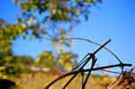 Vineyard Branches by jakobdenk