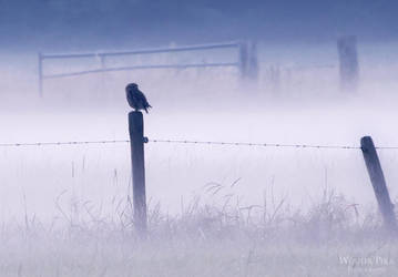 In the mists I by WouterPera