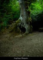 forest 06 by Creamydigital