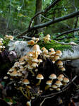 Fungi World 2 by GRANNYSATTICSTOCK