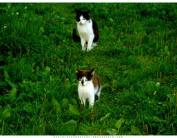 cats. by hystericalemotion