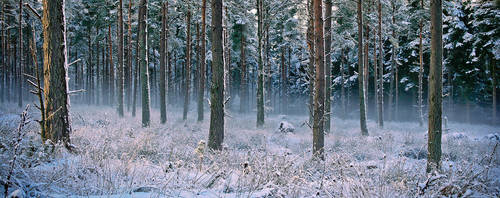 Snow Woods by 50mmFairy