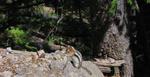 Praying Chipmunk by UItimate
