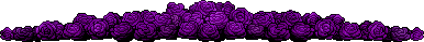 Purple Roses Divider by ThisPoisonedOne