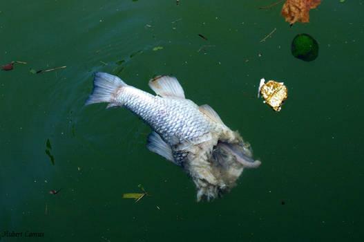 poisson parisien by photo-graphique