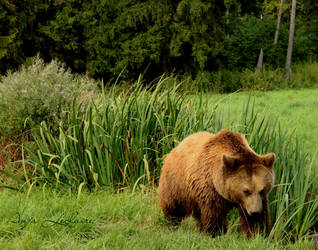 Poing Wildpark - Bear by SymphonicA19