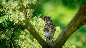 Fieldfare with worms by OliverBPhotography