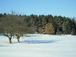 663 - two trees by WolfC-Stock