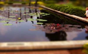 Tiny Pond by mattwileyart