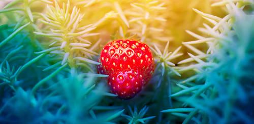 The Lone Strawberry by B-Skipper