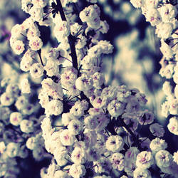 You are beautiful by JuliaMurphy