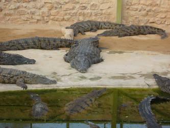 Crockodile park 2, Djerba 2007 by ahwayakchih