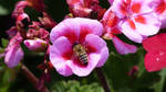A Busy Bee by lilianadesign