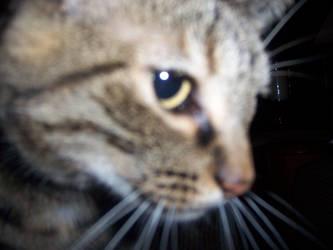 Midnight cat attack by tonightless