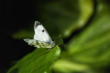Butterfly by asiantuntija
