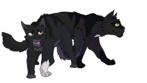Wolfpaw and Nightpaw by Dawnheart101