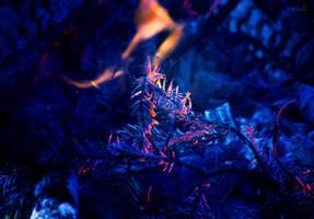 burn by Tiroko