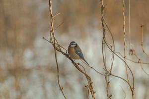 bird by Tiroko
